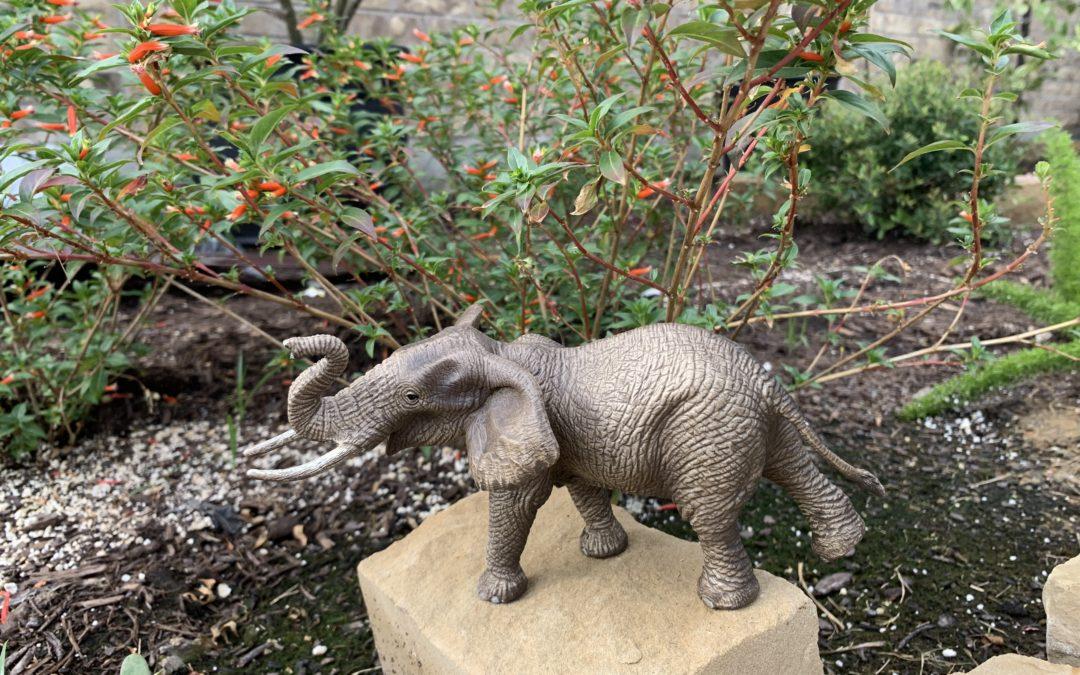 Gardening With Edward The Elephant Blue Water Design